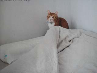 猫犬(ねこいぬ)_e0055098_13455098.jpg