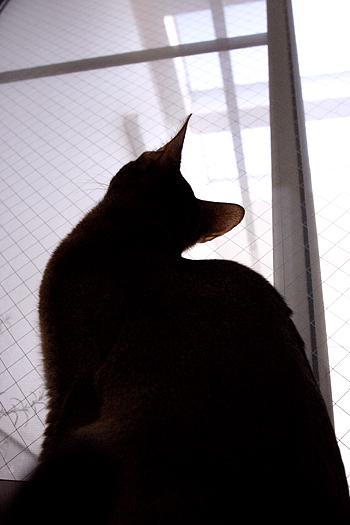 [猫的]空_e0090124_1001627.jpg