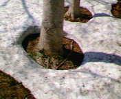 f0107262_1957402.jpg