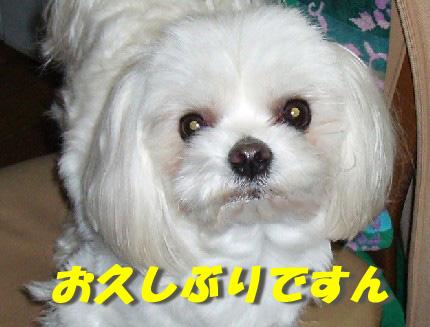 b0060071_0145012.jpg