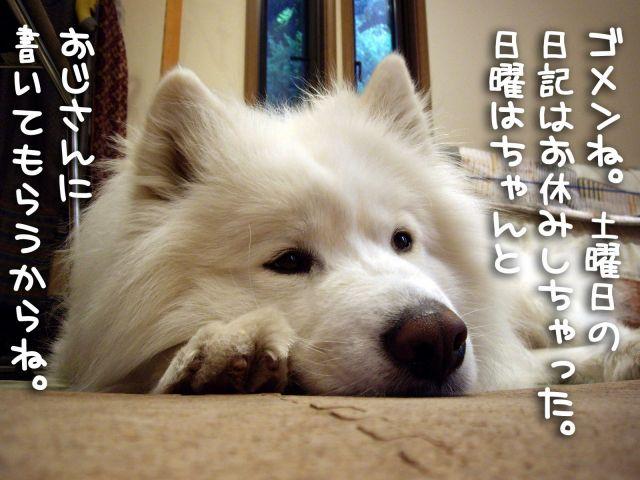 お休みしちゃった。。。_c0062832_0185874.jpg