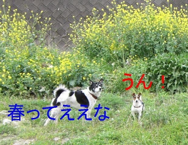 f0053952_22114438.jpg