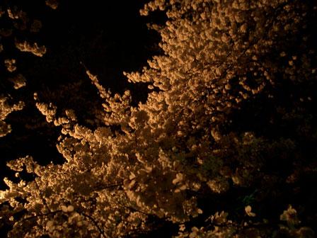 夜桜_e0064461_17412411.jpg