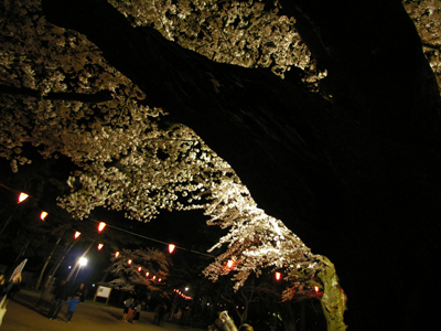 夜桜満開!_b0062963_1222669.jpg