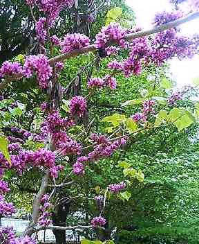 花おりおり 「ジンチョウゲ」_f0052181_12302885.jpg