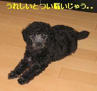 b0073589_98068.jpg