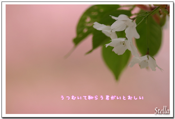 d0015026_1129274.jpg