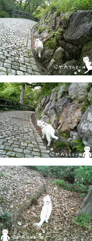 リードでお散歩_e0031853_133313.jpg