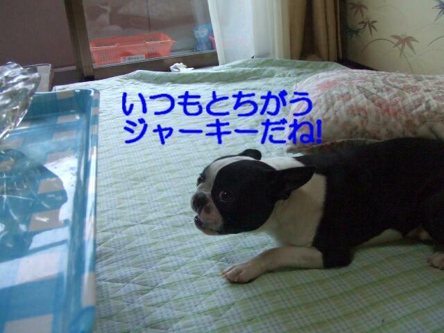 f0059334_1127490.jpg