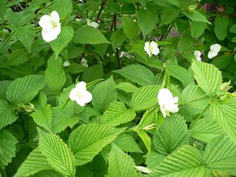 白い花 06-9_c0069048_632120.jpg