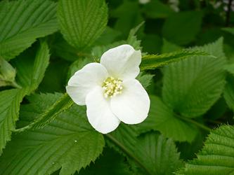 白い花 06-9_c0069048_6323145.jpg