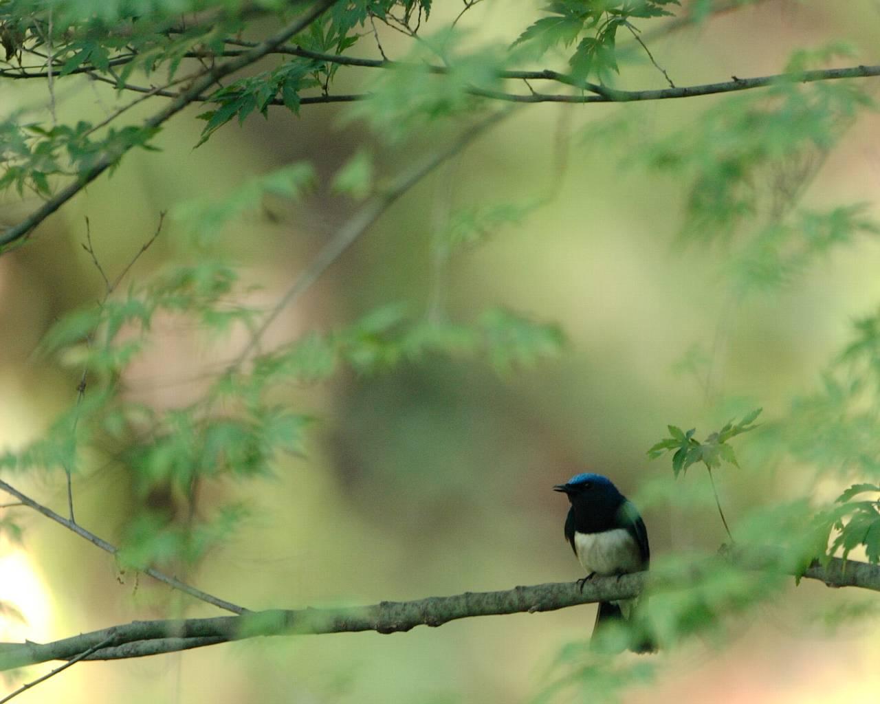 厚木市の青い鳥、赤い鳥、黄色い鳥(全て壁紙あり)_f0105570_21241755.jpg