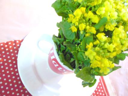 食用 菜の花_d0003401_2337382.jpg