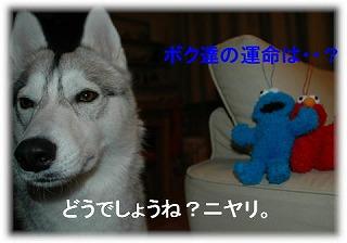 a0047325_1756935.jpg