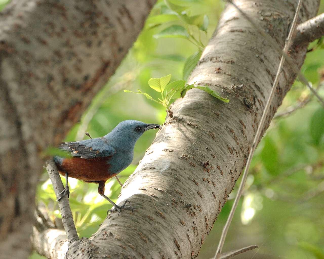 厚木市の別の青い鳥(壁紙あり)_f0105570_18353511.jpg