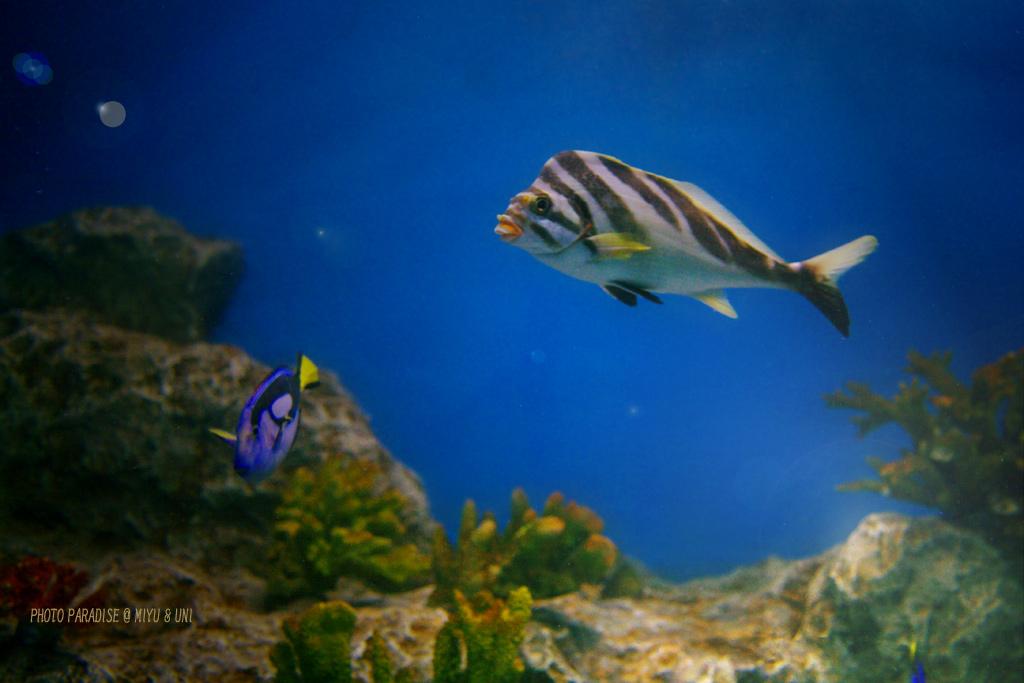 小さな海の中で_a0039489_1310850.jpg