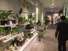 行動科学 そごう大阪店調査_b0054727_20555626.jpg