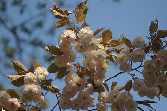 新緑の鶴来樹木公園(2)_d0043136_20541625.jpg
