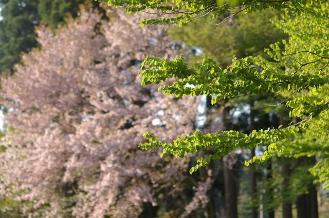 新緑の鶴来樹木公園(2)_d0043136_20583357.jpg