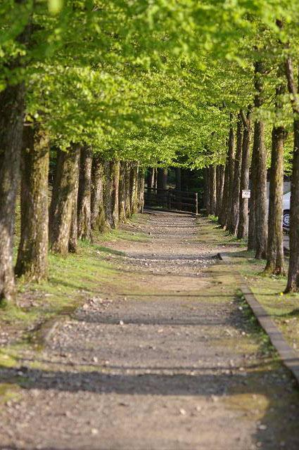 新緑の鶴来樹木公園(2)_d0043136_2059359.jpg