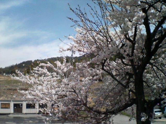 桜咲く北志賀_f0053060_10531818.jpg