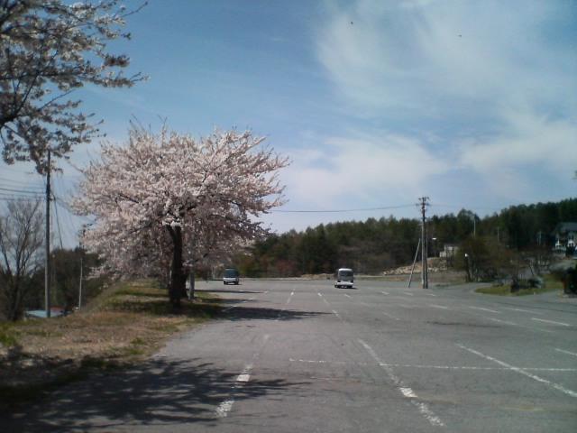 桜咲く北志賀_f0053060_10531837.jpg