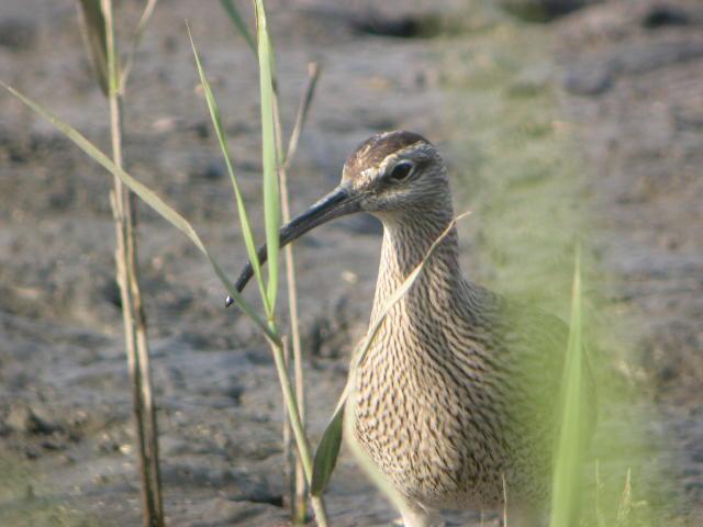 週末とGW前半の鳥類園最新情報(2006.4.29~5.5)_e0046474_10459.jpg