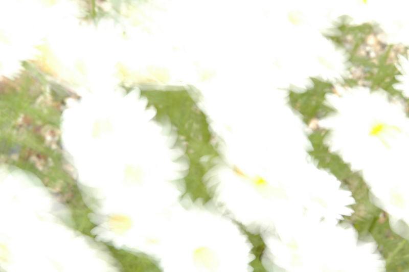 裏庭_b0077681_2116489.jpg