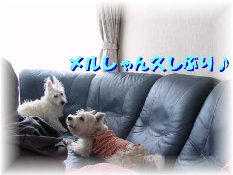 f0039907_19122789.jpg