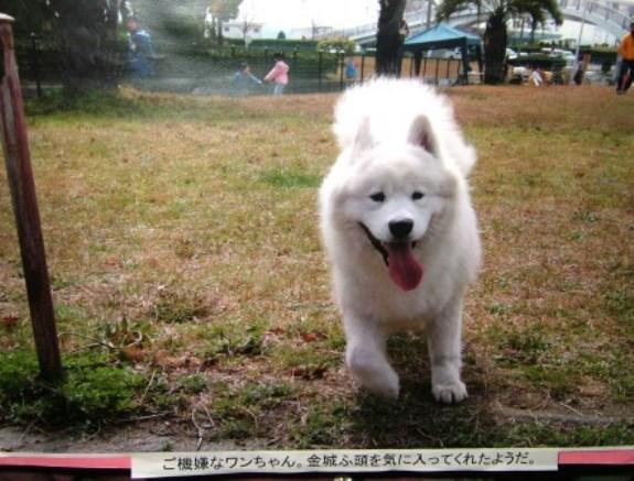 有名犬?????_e0024126_204195.jpg