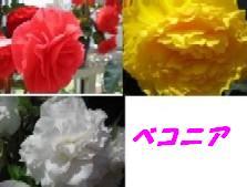 b0086427_23424715.jpg
