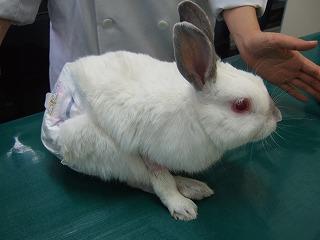 おむつウサギちゃん と 迷い子ウサギちゃん_b0059154_23312397.jpg
