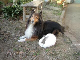 おむつウサギちゃん と 迷い子ウサギちゃん_b0059154_2340515.jpg