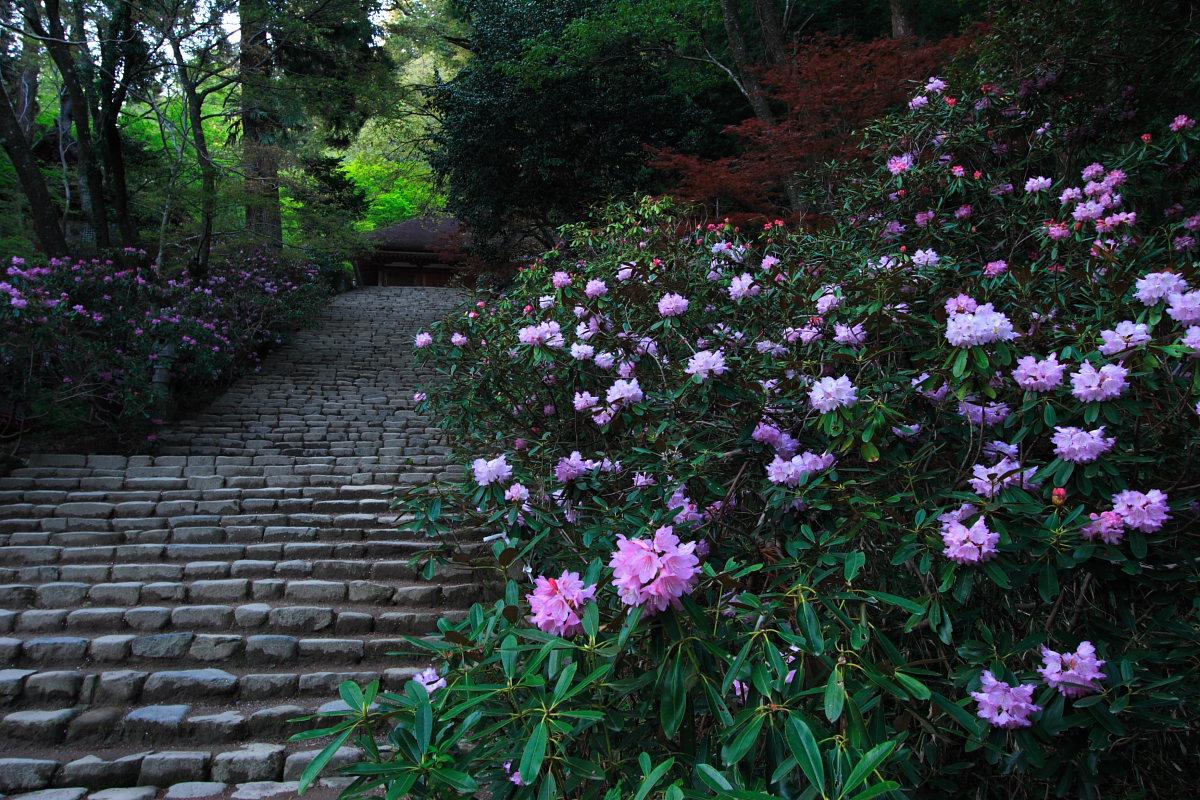 奈良 女人高野 室生寺 2_f0021869_233241100.jpg