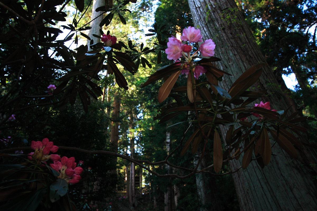 奈良 女人高野 室生寺 2_f0021869_23373940.jpg