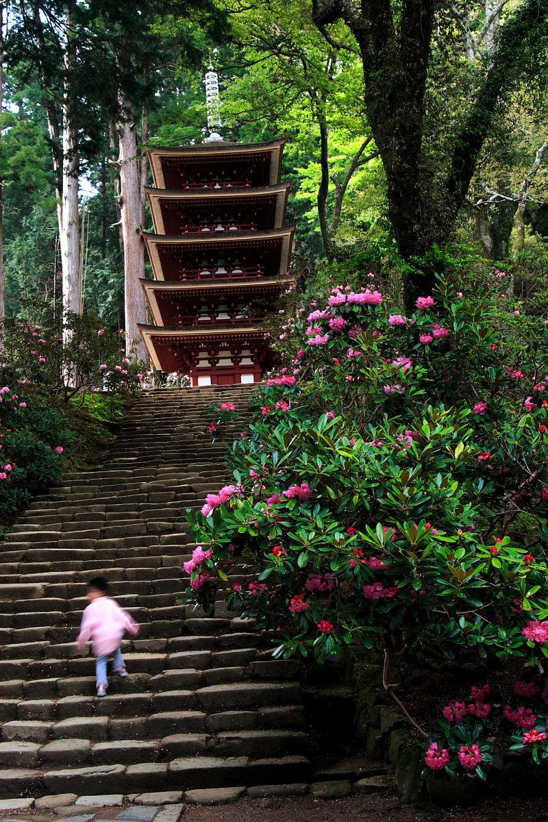 奈良 女人高野 室生寺 2_f0021869_2341524.jpg
