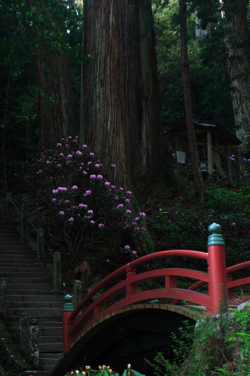 奈良 女人高野 室生寺 2_f0021869_23493062.jpg