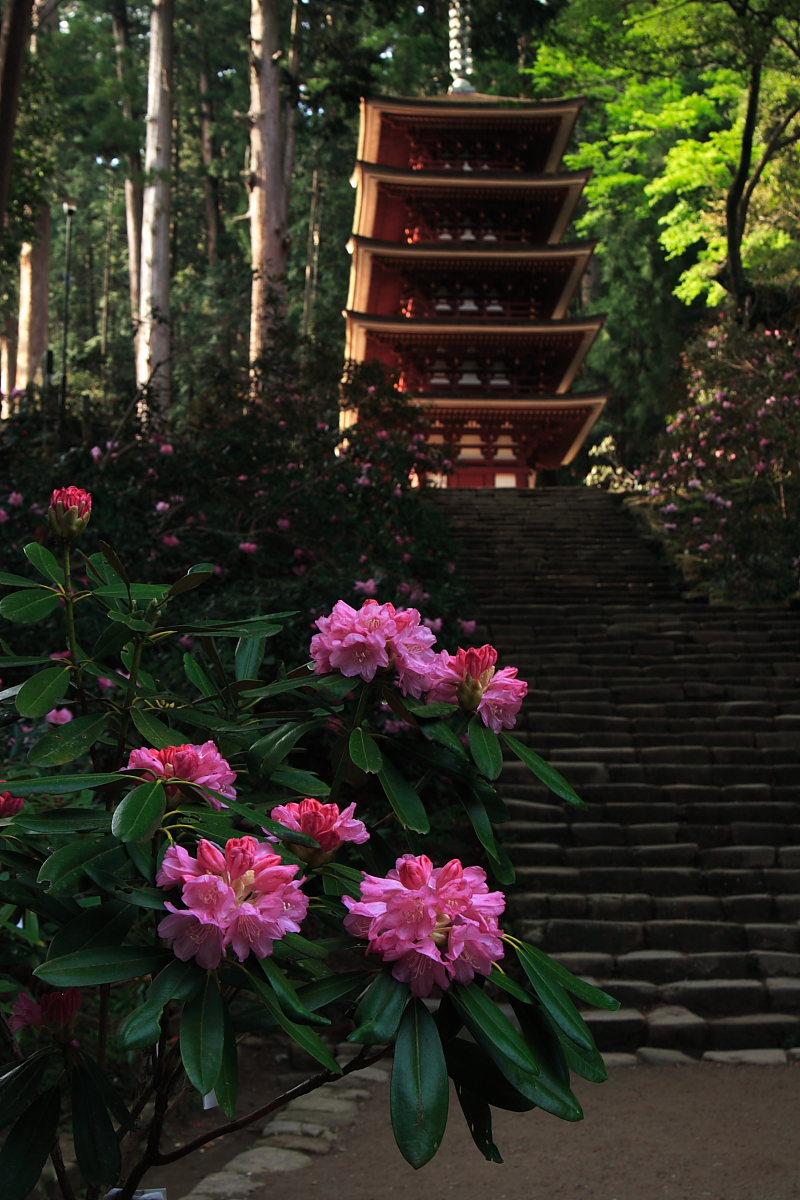 奈良 女人高野 室生寺 2_f0021869_23545891.jpg