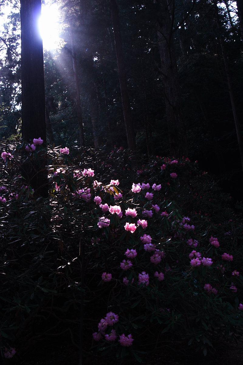 奈良 女人高野 室生寺 2_f0021869_2356920.jpg