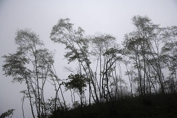 雨の日_b0074098_1851370.jpg
