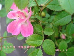 f0057006_1515883.jpg