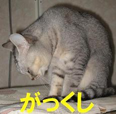 f0002743_2220077.jpg