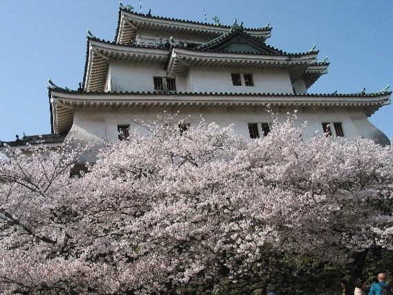 和歌山城と桜_b0093754_0273996.jpg