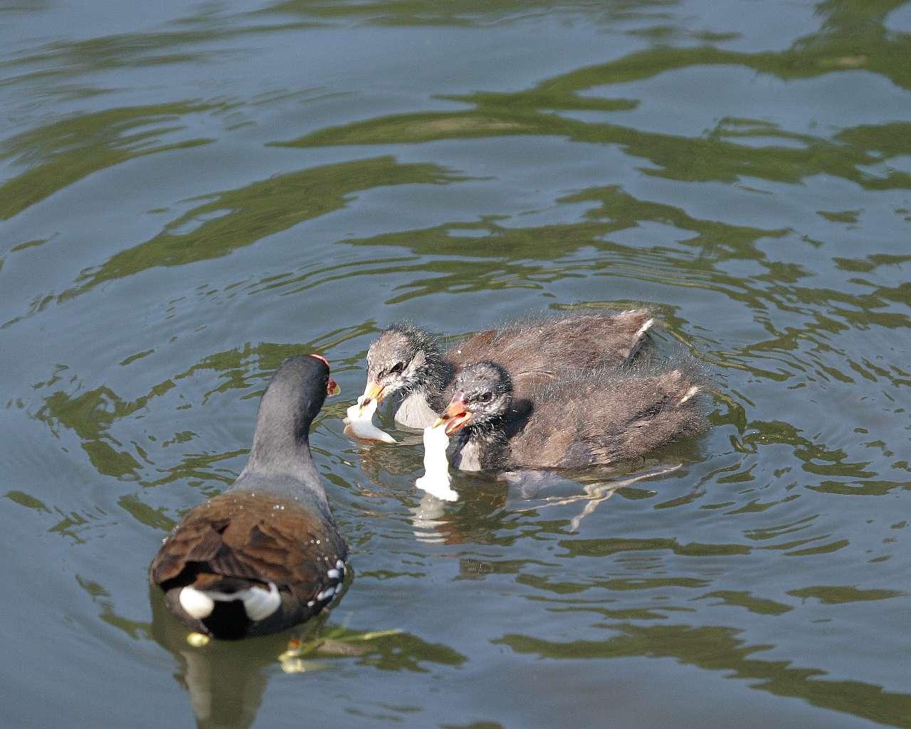子育てに忙しい野鳥たち(その2)_f0105570_21493135.jpg