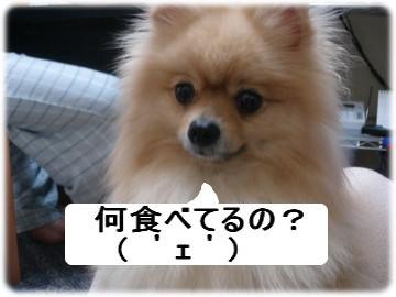 b0078073_23192544.jpg