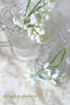 *ただいま開花調節中*_d0000304_2365377.jpg