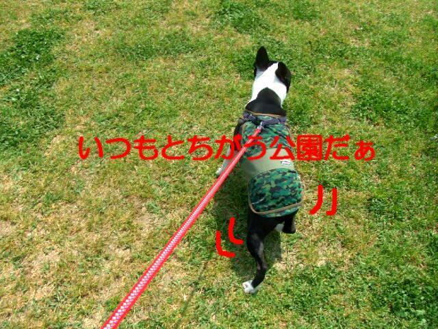 f0059334_1028743.jpg