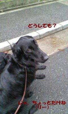 c0050400_2213075.jpg