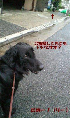 c0050400_2291998.jpg