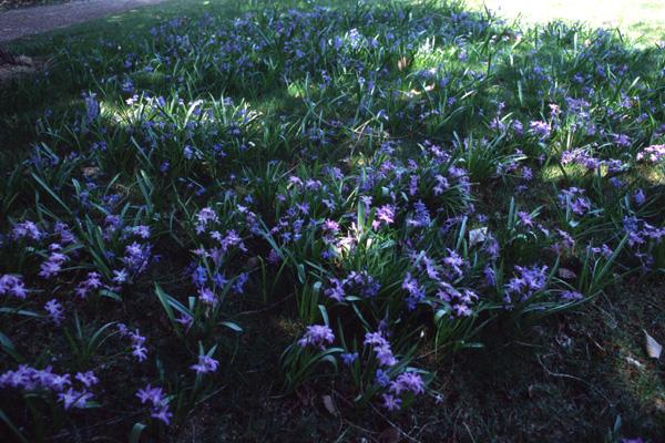 春の信州へ 2006(1) -バラクラ編-_b0043304_23425454.jpg